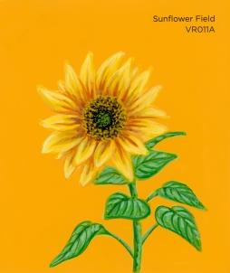 sunflower field912
