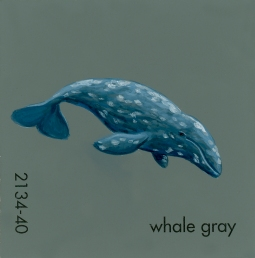 whale gray842