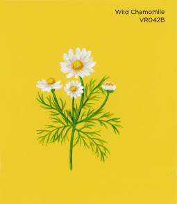 wild chamomile914