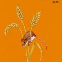 autumn meadow004