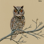 brown owl007