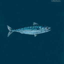 fish tale963