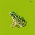 friendly frog967