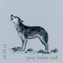gray timber wolf019