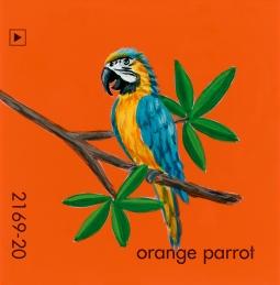 orange parrot843