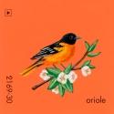 oriole954