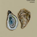 oyster shoal962