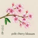 pale cherry blossom934