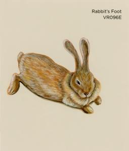 rabbit's foot996