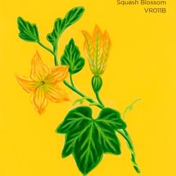 squash blossom002