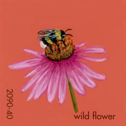wild flower696