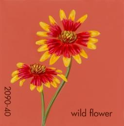 wild flower990