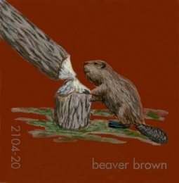 beaver brown171