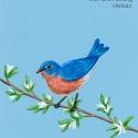 blue bird morning200