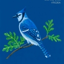 blue jay crest204
