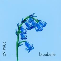 bluebell215