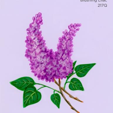 blushing lilac232