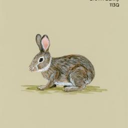 brown bunny202