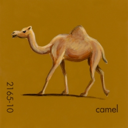camel172