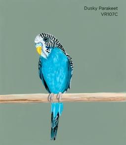 dusky parakeet198