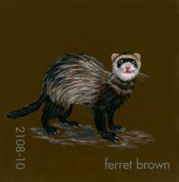 ferret brown190