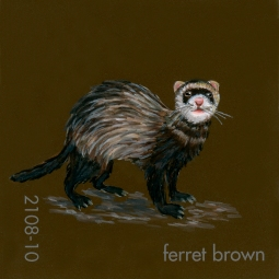 ferret brown190