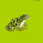 friendly frog203
