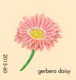 gerbera daisy047