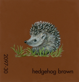 hedgehog brown191