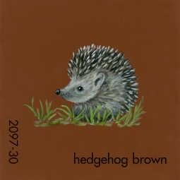 hedgehog brown191