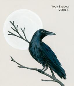 moon shadow206