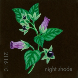 night shade045