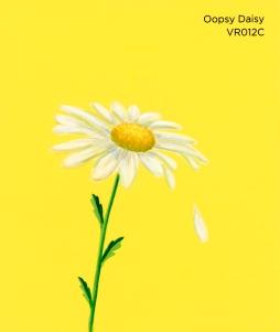 oopsy daisy072