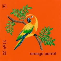 orange parrot179