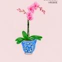 orchid blush061