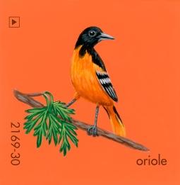 oriole185