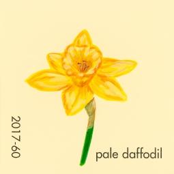 pale daffodil048