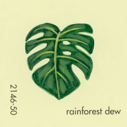 rainforest dew053