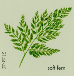 soft fern028