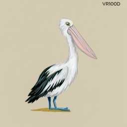soft pelican195