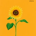 sunflower field071