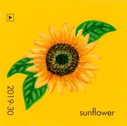 sunflower043