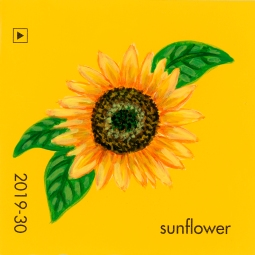 sunflower043