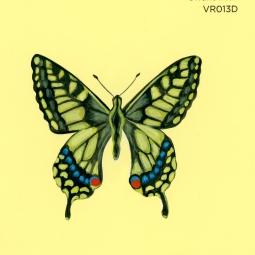 swallowtail233