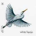 white heron178