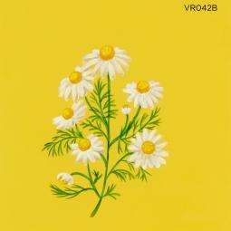 wild chamomile060