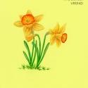 wild daffodil064 copy